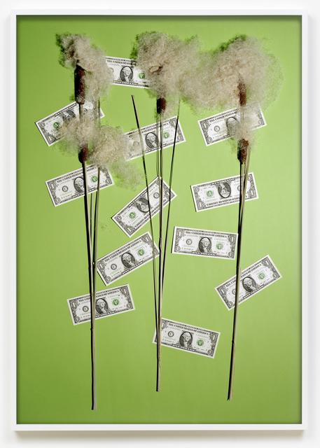 Annette Kelm, 'Money Tree / Blossom', 2016, Photography, Archival pigment print, KÖNIG GALERIE