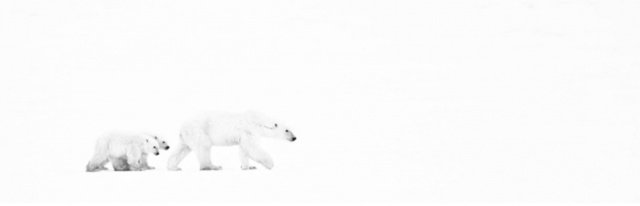 David Yarrow, 'White Out (Cape Churchill, Canada)', Art Angels