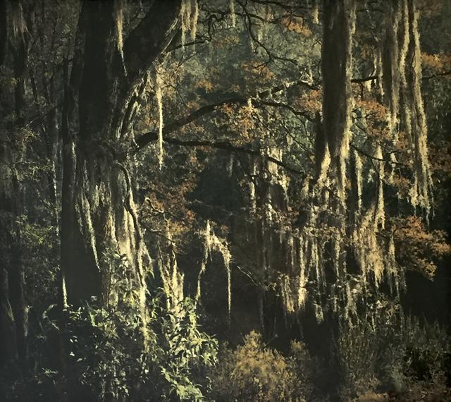 , 'Serranía del Río Frío, Bosque Mágico,' , Galeria Enrique Guerrero