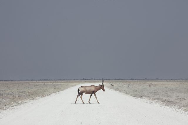 , 'Antelope, Namibia,' 2015, Robert Mann Gallery