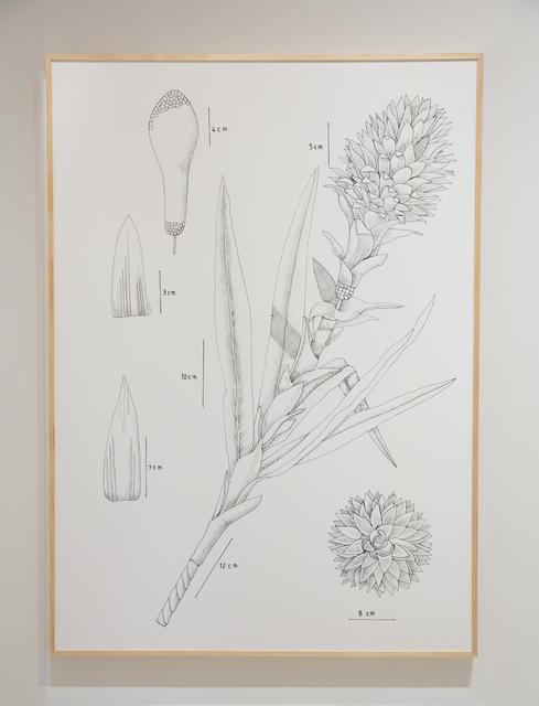 , 'PIT#12 S BROMELIA TILANDSIA (BROMELIA PINEAPPLE FLOWER),' , Chan + Hori Contemporary