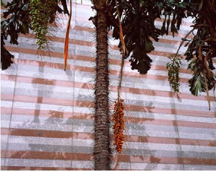 """André Cepeda, 'from the series """"Rua Stan Getz"""" - São Paulo', Cristina Guerra Contemporary Art"""