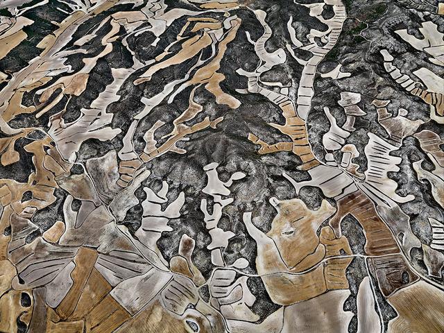 , 'Dryland Farming #12, Monegros County, Aragon, Spain,' 2010, Flowers