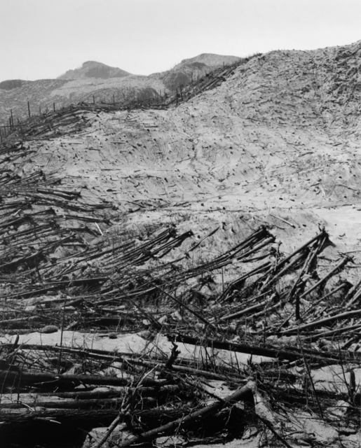 , 'Blowdown reveals boundaries of previous clearcut, 9.5 miles NE of Mt. St. Helens, Wash.,' 1982, Etherton Gallery