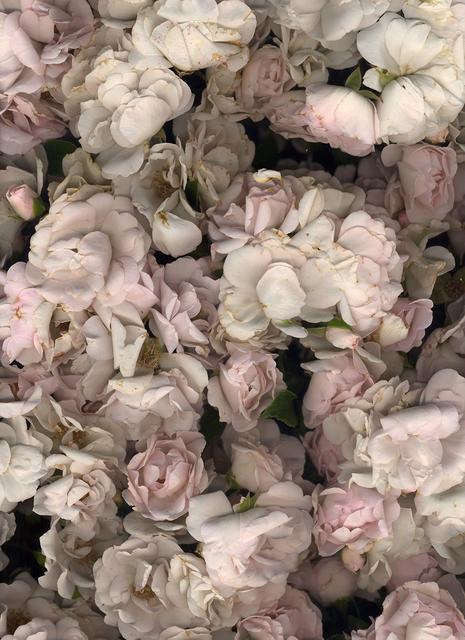, 'Fleurs Rose,' 2016, Luisa Catucci Gallery