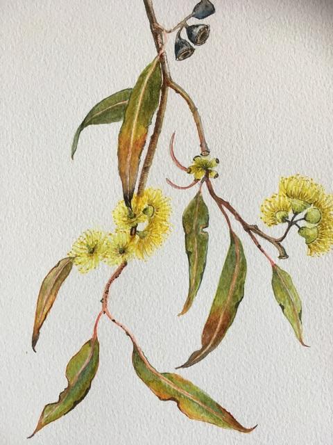 , 'Eucalyptus Woodwardi,' 2019, Margaret River Art Gallery