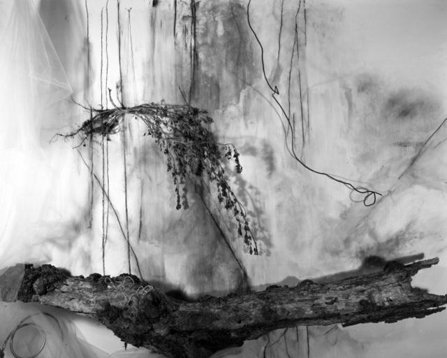 , 'Clover 2,' , Benrubi Gallery