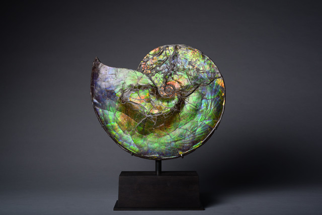 , 'Rare Opalescent Gem Ammonite,' ca. 75000000 BCE, ArtAncient