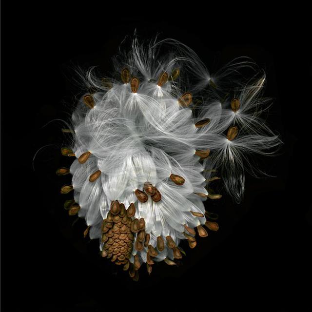 , 'Milkweed,' , Carrie Haddad Gallery