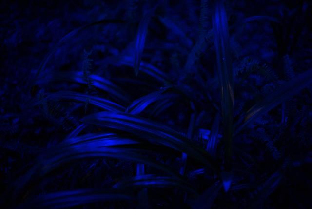 , 'Blue Plant I,' 2018, ZETO ART