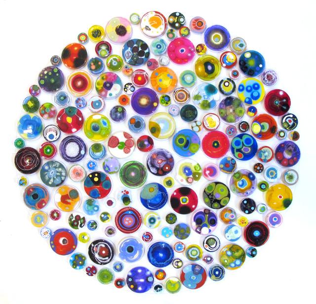 Klari Reis, 'Hypochondria Multicolored, 150 Pieces', 2018, Mixed Media, Mixed Media, Petri Dishes, Tee Nuts and Steel Rods, Cynthia Corbett Gallery