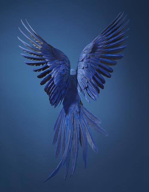 , 'Hyacinth Macaw,' 2017, Osborne Samuel