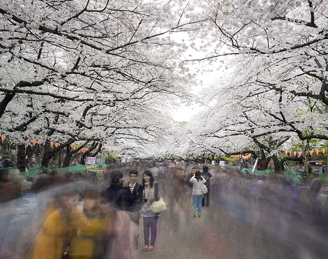 , 'Hanami #1, Ueno Park, Wednesday April 2nd (TV14600),' 2014, Benrubi Gallery