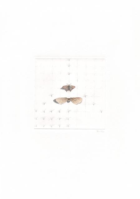 , 'schmetterlinge und samen,' 2013, Artdepot