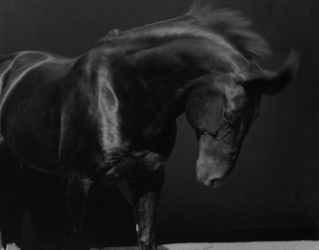 Sheila Rock, 'Horse #43', ElliottHalls