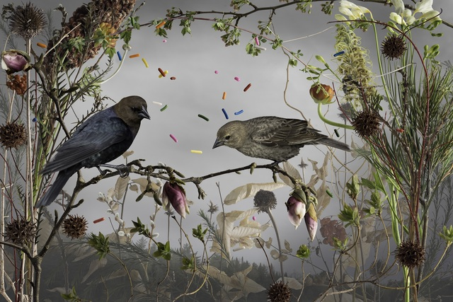 , 'Cowbirds and Cake Sprinkles,' 2015, Richard Levy Gallery