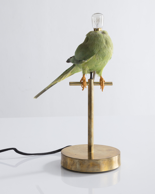 , 'Single Perch Lamp. Taxidermy bird and electrical components. ,' 2018, R & Company