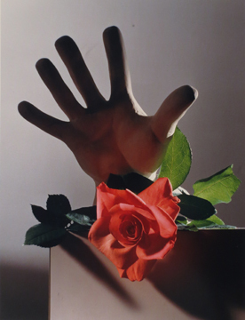, 'Rose with a Cast of Michelangelo's Hand,' , Staley-Wise Gallery
