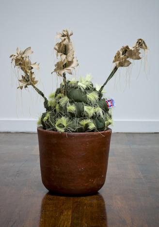Margarita Cabrera, 'Echinocereus Dasyscan #4', 2012, Talley Dunn Gallery