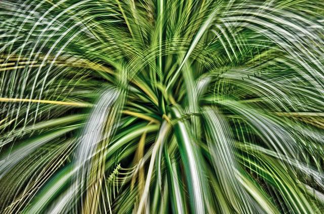 , 'Artificial view_botanical_7,' 2015, KANA KAWANISHI GALLERY