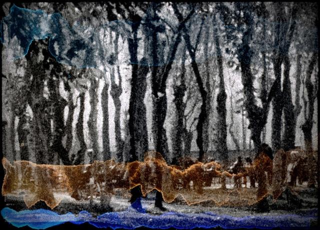 Orhan Cem Çetin, 'Where have all the frogs gone?', 2014, Photography, Fine-art pigment print, Sanatorium