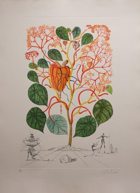 Salvador Dalí, 'Flora Dalinae Begonia', 1968, Fine Art Acquisitions