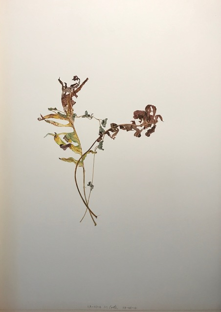 , 'Overlapping Leaves series, 23-7-14, 7-8-14,' 2014, Purdy Hicks Gallery