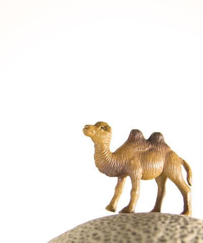 , 'Cantaloupe the Camel,' , ArtStar
