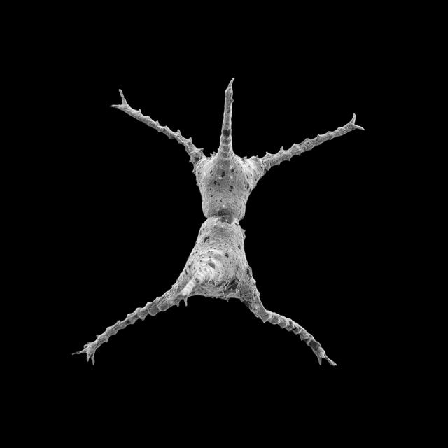 , 'Stephen (Staurastrum planctonicum),' 2016, DITTRICH & SCHLECHTRIEM