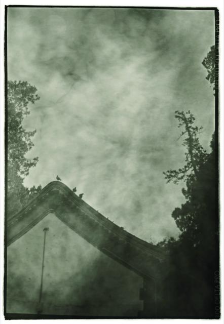 , 'Three Birds,' 2011, see+ Gallery