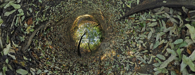 , 'Entre hojas secas / Between dry leaves,' 2011, Artflow Galeria