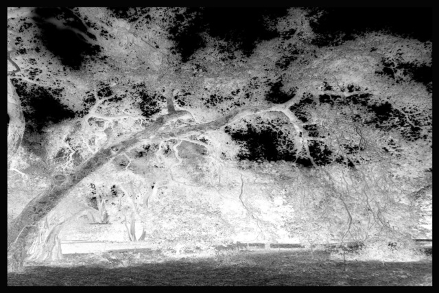, 'Ghost Trees II,' 2014, CMS Art Projects