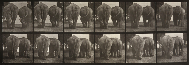, 'Animal Locomotion: Plate 735 (Two Elephants Walking),' 1887, Huxley-Parlour