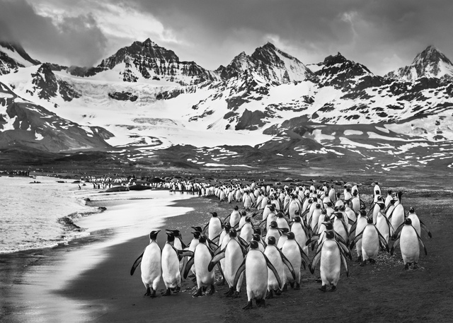 David Yarrow, 'The Breakfast club', 2018, Photography, Archival Pigment Print, Tres Hombres