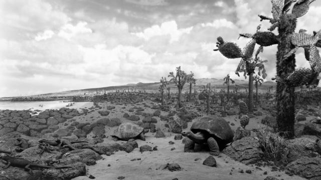 , 'Galapagos,' 1980, Fraenkel Gallery