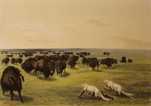 George Catlin, 'Buffalo Hunt Under the White Wolf Skin', 1844, Print, Color lithograph, Kiechel Fine Art