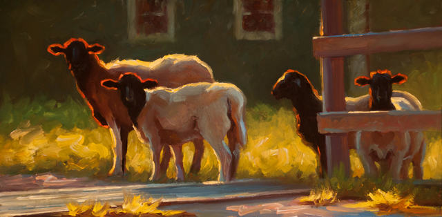 """, '""""Free Range"""" oil painting of brown and white sheep in yellow grass with backlighting,' 2018, Eisenhauer Gallery"""