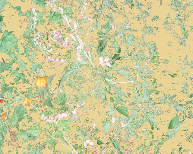 Aaron ROTHMAN, 'Wildflowers (PVGM2)', 2015, Rick Wester Fine Art