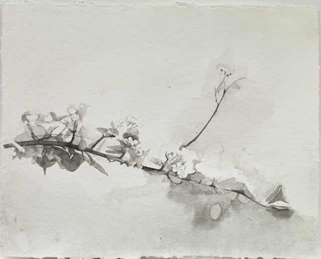 , 'Pear Blossom,' 2016, Purdy Hicks Gallery