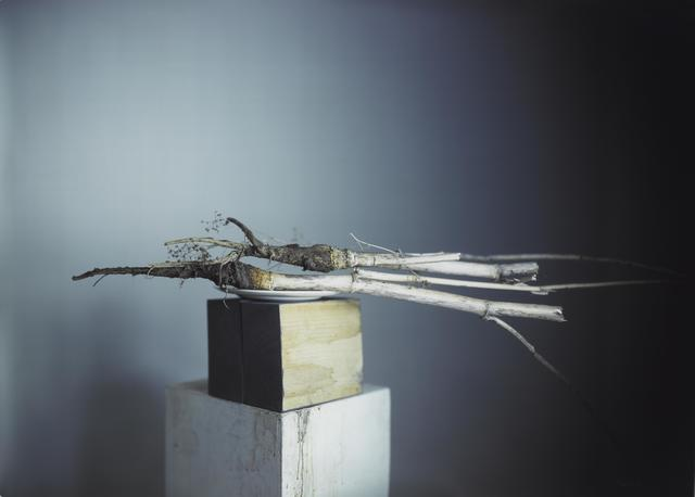 , 'A More Insidious Root,' 2008, Pace Gallery