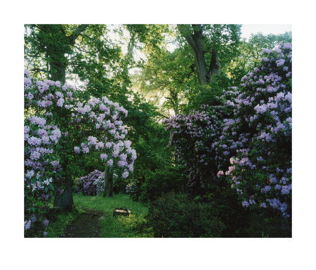 , '1476. Rhododendron. Morning,' 2015, Eleven Fine Art
