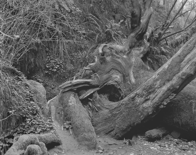 , 'Throbbing Emergency Portal, Open In My Night, Orick, California,' 2015, Moran Moran
