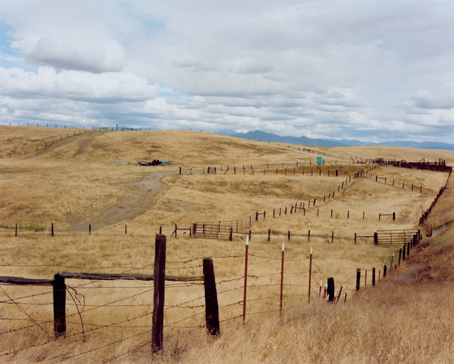 Sharon Lockhart, 'Cattle Ranch, Tulare County', 2011, CCA Wattis Institute For Contemporary Arts