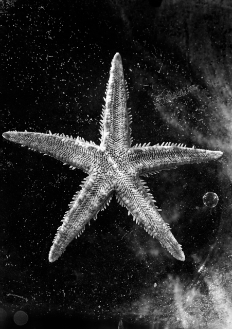Nomi Baumgartl, 'Ocean Star in the Universe, dedicted to Andreas Feininger', 2002, Photography, Gelatin Silver print, Ira Stehmann Fine Art Photography