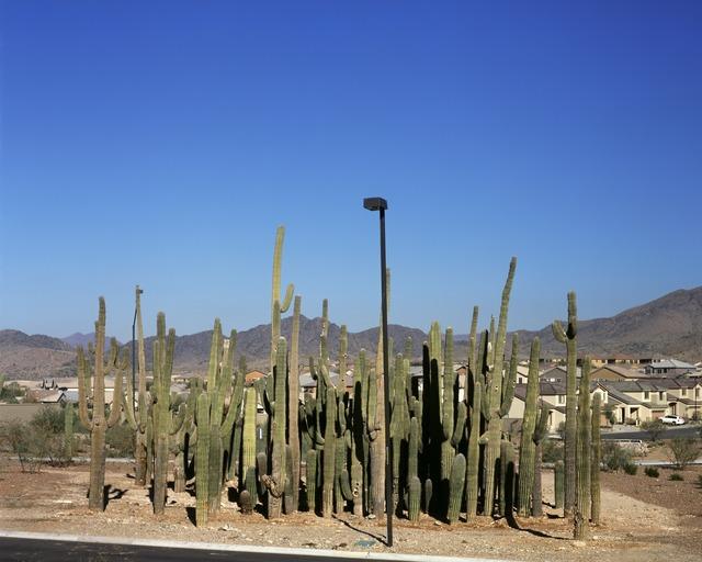 Donald Woodman, 'Relocated Saguaro Cactus', 2007, Photography, Donald Woodman Studio