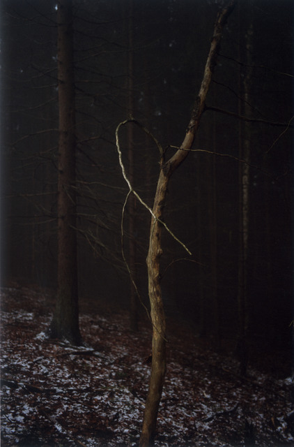 , '#4 Untitled (Dead Tree Dancing) from FOREST 2000-2005,' 2005, Mai 36 Galerie