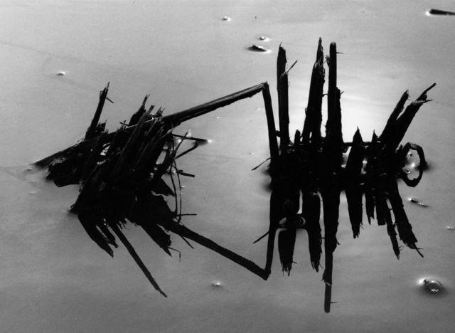, 'Riz en hiver, Camargue,' 1960, Bernheimer Fine Art