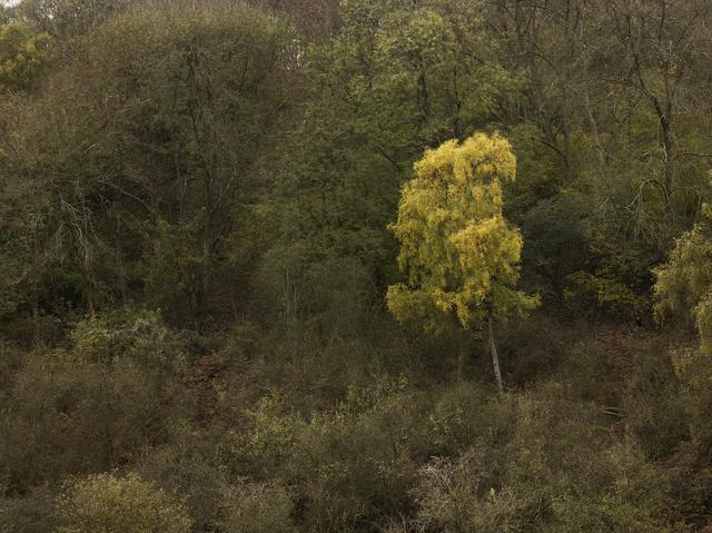Leon Steele, 'Heath #16', 2010, Wren London
