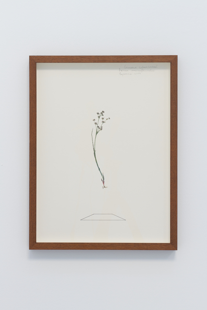 , 'Herbarium II,' 2014, narrative projects