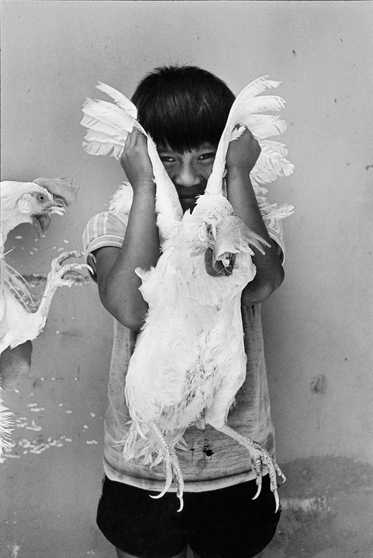 , 'El Gallo (The Rooster), Juchitán, Oaxaca,' 1986, Etherton Gallery